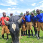 boys with cow